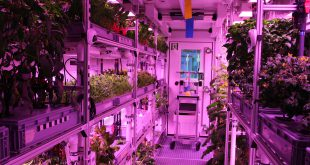 Inside the EDEN ISS greenhouse
