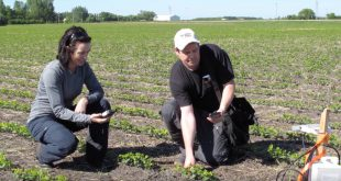 Data from the RADARSAT Constellation Mission will help farmers